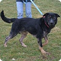 Adopt A Pet :: Patty - Akron, OH