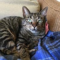 Adopt A Pet :: Norman - Frankfort, IL