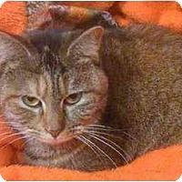 Adopt A Pet :: Tori - Tomball, TX
