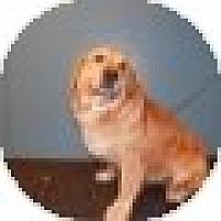 Adopt A Pet :: Lauren - Denver, CO