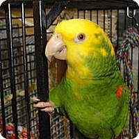 "Adopt A Pet :: ""R"" is An Amazing 38 Year Youn - Vancouver, WA"