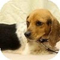 Adopt A Pet :: Leona - Novi, MI