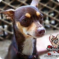 Adopt A Pet :: Phoenix - Huntington Beach, CA
