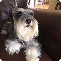 Adopt A Pet :: Greta-News! - Laurel, MD