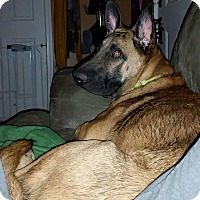 Adopt A Pet :: Ryver - Rochester/Buffalo, NY