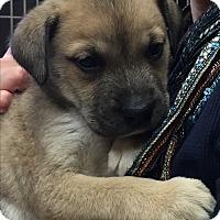 Adopt A Pet :: Pluto - Waldorf, MD