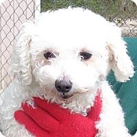 Adopt A Pet :: Lolli - Crump, TN