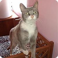 Adopt A Pet :: Geneva - Cheltenham, PA