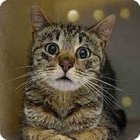 Adopt A Pet :: Tina - Hudson, NY
