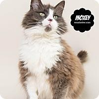 Adopt A Pet :: Moxey - Wyandotte, MI