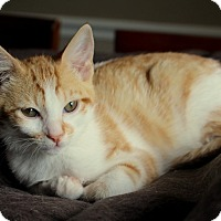 Adopt A Pet :: Butterscotch - Homewood, AL