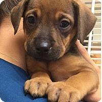 Adopt A Pet :: Marcie - Ft. Lauderdale, FL