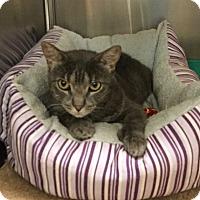 Adopt A Pet :: Diane - Colmar, PA