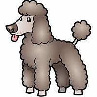 Poodle (Miniature) Mix Dog for adoption in San Bernardino, California - URGENT on 8/27 SAN BERNARDINO