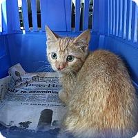 Adopt A Pet :: Geena - Brainardsville, NY