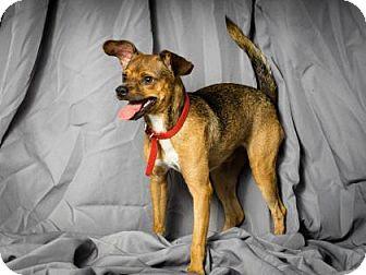 Terrier (Unknown Type, Small) Mix Dog for adoption in Tulsa, Oklahoma - La Miles
