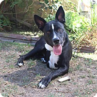 Adopt A Pet :: Keaton - Los Angeles, CA
