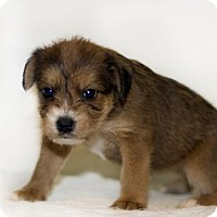 Adopt A Pet :: Jo - Shamokin, PA