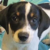 Adopt A Pet :: Cannoli - Plainfield, CT