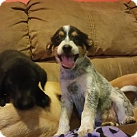 Adopt A Pet :: Trinity - Sandwich, MA
