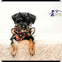 Adopt A Pet :: Gabriella - Richardson, TX