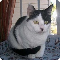 Adopt A Pet :: Susie - Merrifield, VA