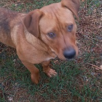 Adopt A Pet :: Ridge - Demorest, GA