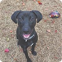 Adopt A Pet :: Mazie - Pulaski, TN