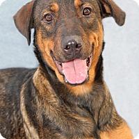 Adopt A Pet :: Shayna - Encinitas, CA