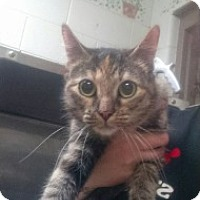 Adopt A Pet :: Zelda - Saginaw, MI