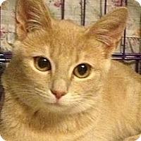 Adopt A Pet :: Apple - Mount Laurel, NJ