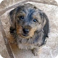 Adopt A Pet :: Patches - North Port, FL