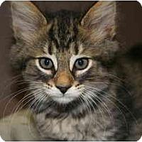 Adopt A Pet :: DANA - SILVER SPRING, MD
