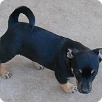 Adopt A Pet :: Sandra - dewey, AZ