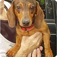 Adopt A Pet :: Minnie - Miami, FL