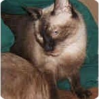 Adopt A Pet :: Simon & Sadie - Dallas, TX