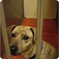 Adopt A Pet :: Cash - Fresno, CA