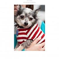 Adopt A Pet :: Roo roo - Edmond, OK