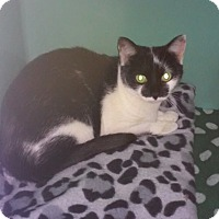 Adopt A Pet :: Peanut - Franklin, NH