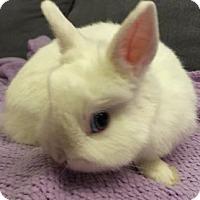 Adopt A Pet :: Figment - Woburn, MA