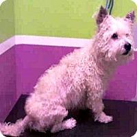 Adopt A Pet :: Caleb-ADOPTION PENDING - Boulder, CO