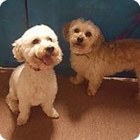 Adopt A Pet :: Lady - Livermore, CA