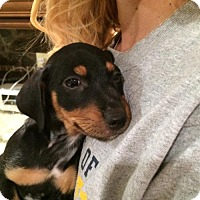 Adopt A Pet :: Angel - Oakhurst, NJ