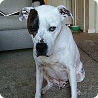 Adopt A Pet :: Zak - Bellingham, WA