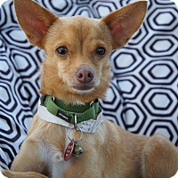 Adopt A Pet :: Nucky AKA Felipe - Los Alamitos, CA