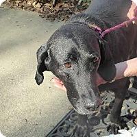 Adopt A Pet :: Evie - Rockville, MD