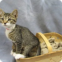 Adopt A Pet :: Thomas - Lexington, NC