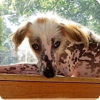 Adopt A Pet :: Walla in Michigan - Lansing, MI