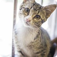 Adopt A Pet :: Flipper - Sterling, KS