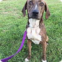 Adopt A Pet :: Zoey - Maryville, MO